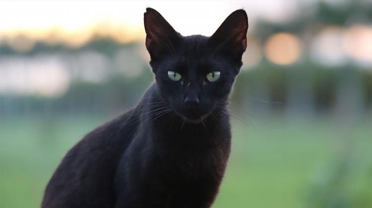 black-cat-by-cuatrok77.jpg