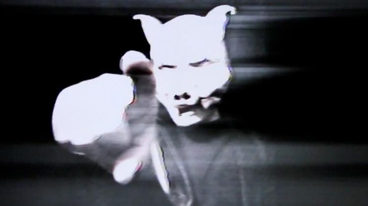 pig-video-2.jpg