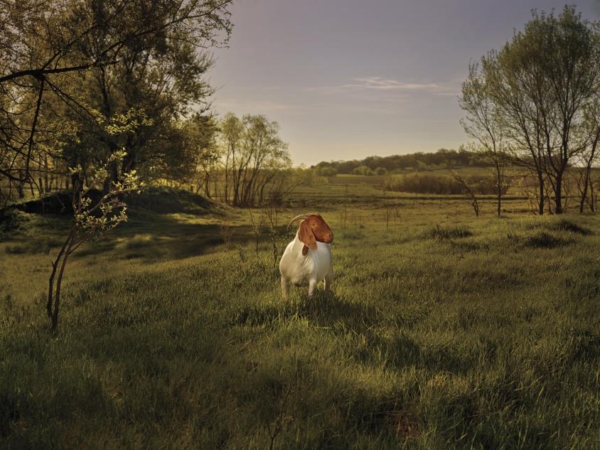 goats_5_Emerald_Credit_R.J.Kern.jpg, R. J. Kern