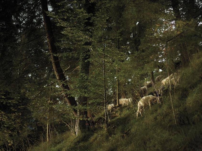 goats_7_German Pastoral Study IV_Credit_R.J.Kern.jpg, R. J. Kern