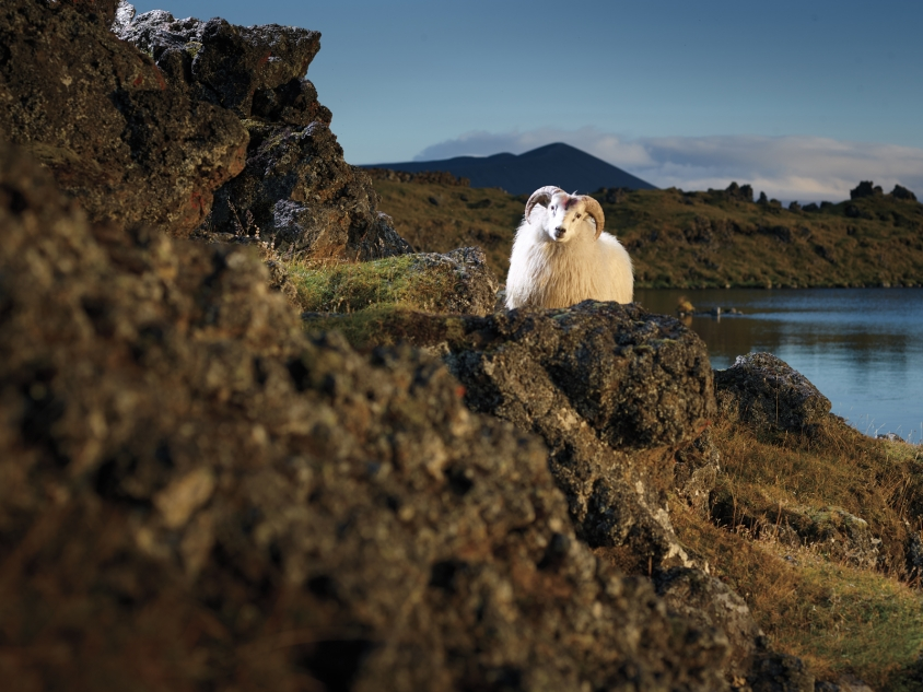 goats_9_Gandolf_Credit_R.J.Kern.jpg, R. J. Kern