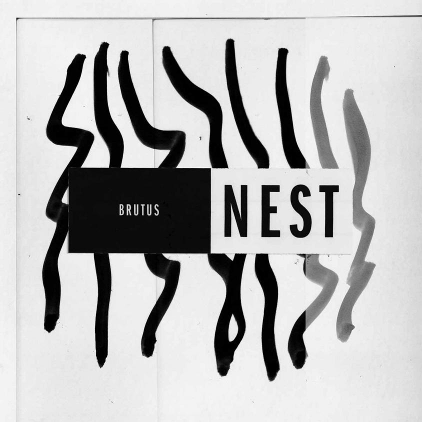 brutus_nest.jpg